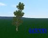 tall  tree 3 animated