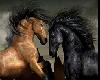 cavallos de pura raza
