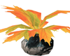 fall Plant