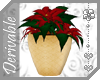 ~AK~ Potted Poinsettia