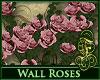 Wall Roses
