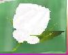 [TGUU]Rose Pin white