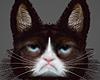 !! Grumpy Cat !!  =^n^=