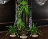 Cocio Milano 3 Plants