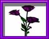 (sm)purple roses animate