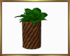 Potted Plant Derive