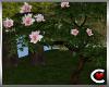 Garden Magnolia Tree