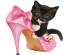 cat and shoe 71