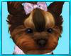 Yorkie Pet Dog