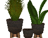 Fall 3 piece plant holde