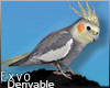 Parrot Hd. M :ᚠ: Drv!