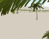Palm Spring Cali