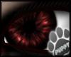 [Pup] Evil Eye