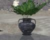 Amara Plant 2