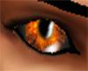 Twilight Eye Male