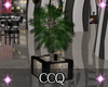 [CCQ]NC:Potted Plant