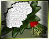 LS~Empress Liz Roses