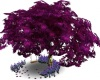 Purple Tree and Swing