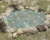 Garden Koi Pond