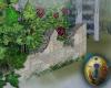 .-| Secret Garden Wall