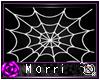 Spiderwebs Picture