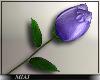 !M! Valentines rose pur