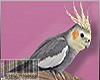 😜HEAD BIRDY F