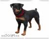 SCR. Rottie Guard Dog