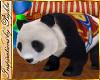 I~Circus Panda Bear