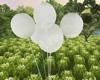 WHITE  BALLOONS (KL