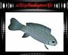 Indy Carp Fish