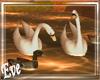 c Water Birds