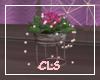 Plant Valentina