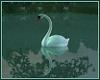 *N* Swan Pair *Kiss