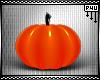 -P- Pumpkin Pets