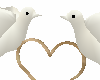 Doves animated