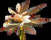 Brown/Beige Tulips -R