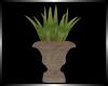 [B3D] Aloe in Garden Urn