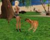 fany dog pet