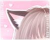 F. Kitten Ears Moka