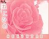 [HIME] Piggy Arm Roses