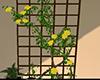 yellow roses trellis