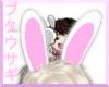 B ` Pig Rabbit EARS