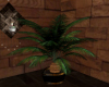 !Cozy Sago Palm