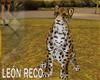 c Animated Tiger