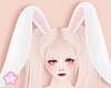 🌟 Bunny Ear|P
