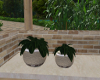 Counter Top Planters