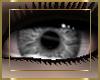 Grey Wolf Eyes [F]