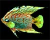 Anim.Under Sea fish 3p/2