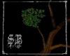 sb Druid Tree